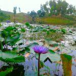 ঘুরে আসুন মৌলভিবাজারের মাধবপুর লেকে!